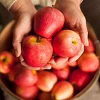 hands holding 3 beautiful apples above a basket full of apples