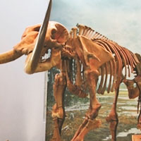 The Hyde Park Mastodon at Ithaca's Museum of the Earth
