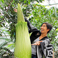 "A visitor is amazed by the towering bloom of a titan arums, world's largest flower, named ""Wee Stinky"""