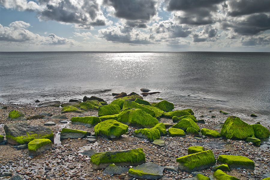 algae-covered rocks on rocky beach