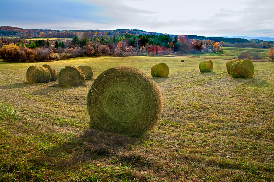 fall scene with hay bales in field