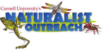 Cornell University's Naturalist Outreach, frog, dragonfly, spider