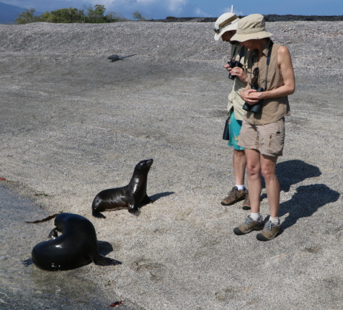 baby sea lions on the galapagos islands